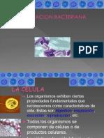 calsificacion_microbiana