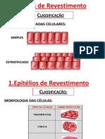 2013 - Biologia - D Ceolin - Epitélios