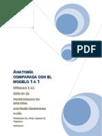 Modelo 1 a 1 - Proyecto de Clase Anatomia Comparada