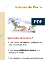 Mordeduras de Perro