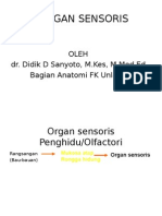 Organ Sensoris.ppt