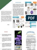 Triptico- Trabajo de Investigación Microbiología