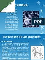 Procesos Neurobioquimicos Del Movimiento