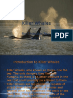 killer whales original