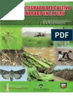 plagas y enfermedades esparrago.pdf