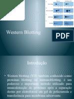 Western Blotting01.pptx