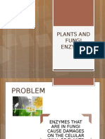 Fungal and Plants Enzymes