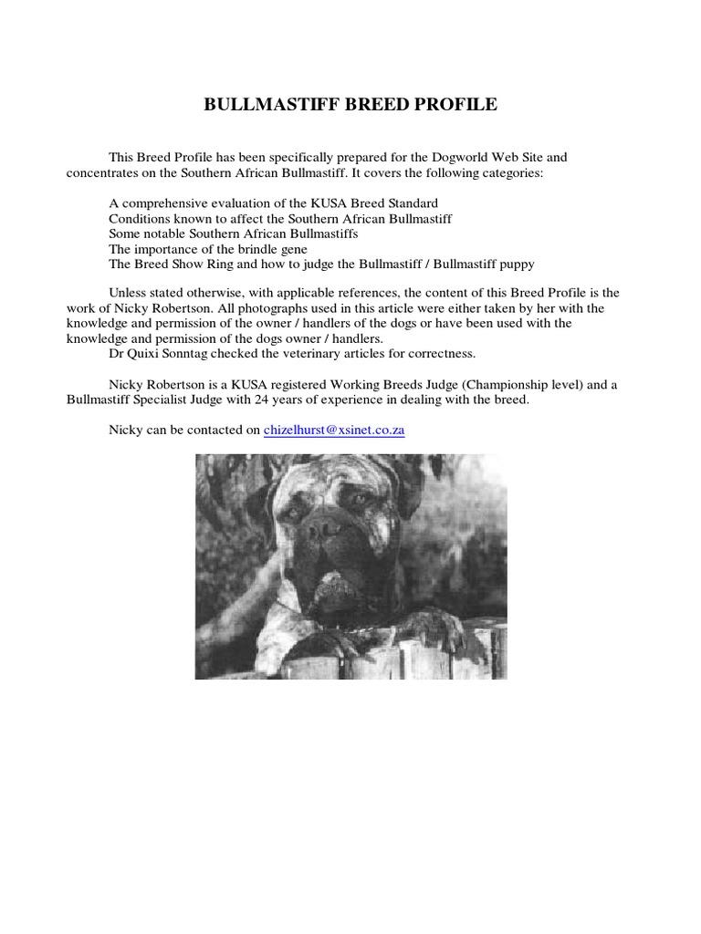 Bullmastiff breed focus human eye glaucoma nvjuhfo Images