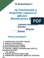 Anatomia Funcțională a Mușchilor GâtuluiAnatomia funcțională a mușchilor gâtului