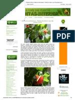 A Febre Das Plantas - Plantas de Interior_ Anthurium Andraeanum - Plantas de Interior Que Não Gostam de Sol