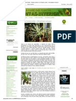 A Febre Das Plantas - Plantas de Interior_ as Plantas-Aranha - Chlorophytum Comusum