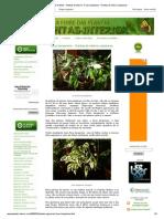 A Febre Das Plantas - Plantas de Interior_ Ficus Benjamina - Plantas de Interior Populares