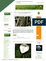 A Febre Das Plantas - Plantas de Interior_ Sansevieria Trifasciata