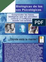 Bases Biológicas de Los Procesos Psicológicos