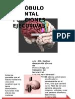 Lobulo Frontal - Funciones Ejecutivas