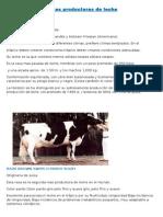 Vacas Productoras de Leche