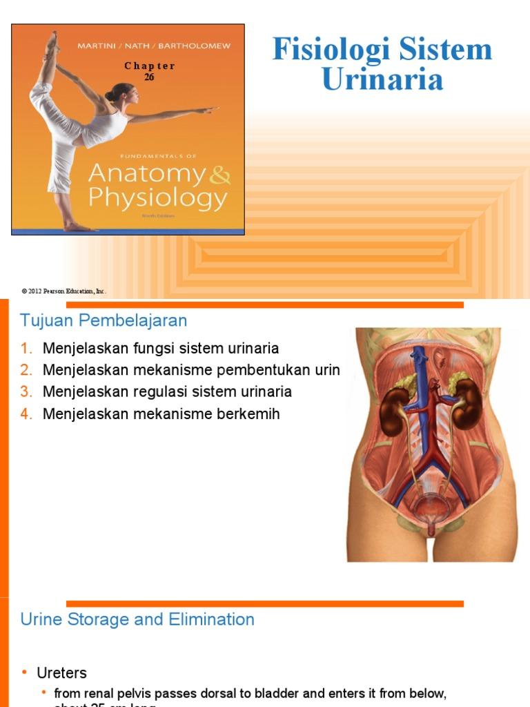 Fisiologi Sistem Urinaria | Urinary Bladder | Urination