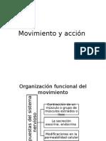 Organización Supraespinal Del Movimiento