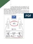 Patofisiologi Trikomoniasis