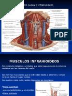 Musculos Suprahioideos e Infrahioideos 1213570191801849 9