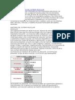 Anatomia y Fisiologia Del Sistema Muscular