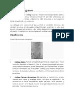 informe histoloia