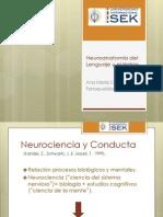 9 Neuroanatomia 2.pdf