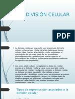 División Celular- Mitosis y Meiosis