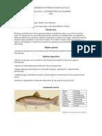 informe practica dos fisiologia.docx