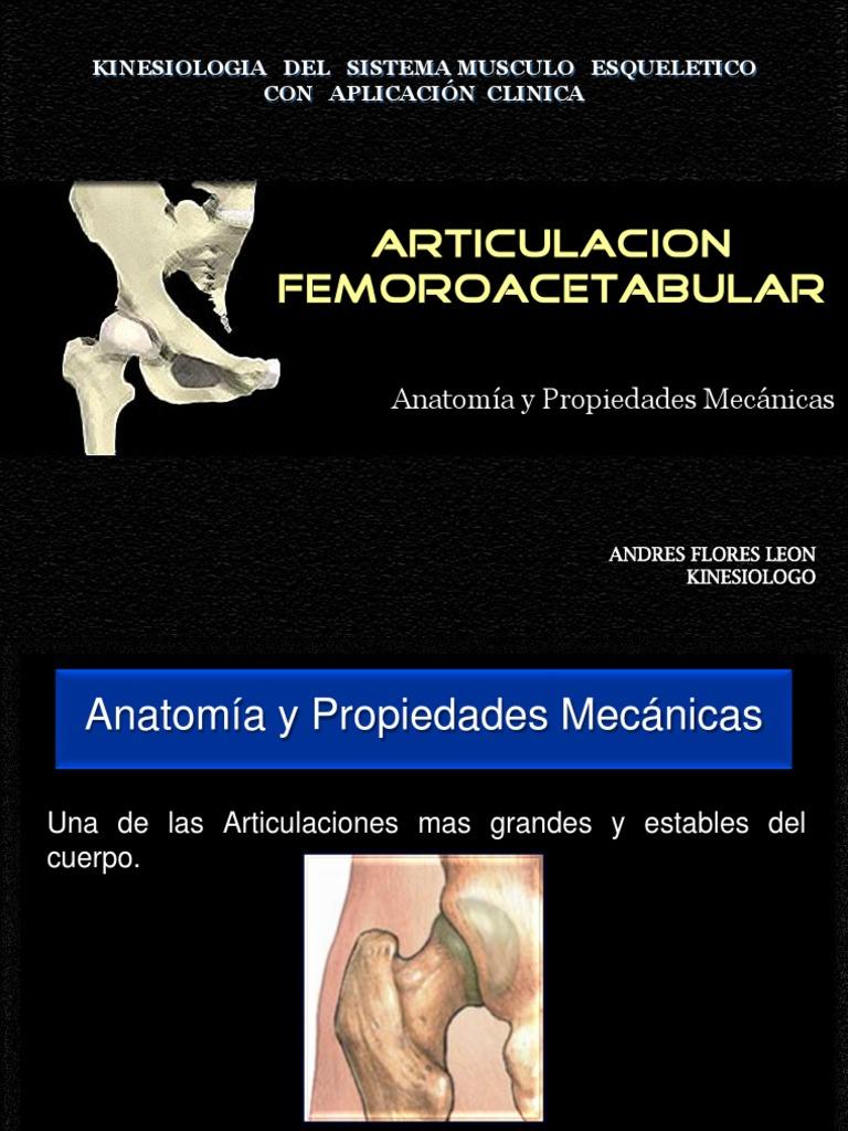 Magnífico Kinesiología Clínica Y Anatomía Patrón - Imágenes de ...