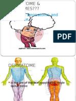 Dermatome & Myotomes