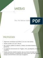 2. AMEBAS