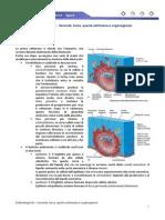 Embriologia 03 - Seconda, Terza, Quarta Settimana e Organogenesi