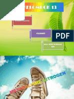 metabolisme nitrogen.ppt