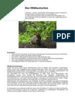 Wildkaninchen Infos; Divji kunići - osnovni podatci (něm.)