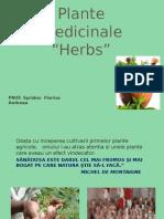 Plante medicinale ppt