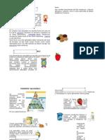 diptico presentacion