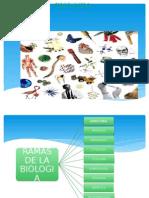 BIOLOGIA EXPONER