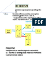 PIRUVATO.pdf
