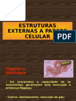 Estruturas Externas e Internas a Parede Celular_AULA 3