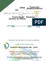 CARACTERÍSTICAS DE LA TRANSCRIPCIÓN Y TRADUCCIÓN GENÉTICA