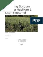 5 Batang Sorgum Mampu Hasilkan 1 Liter Bioetanol