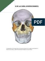 Osteología de La Cara- Informe