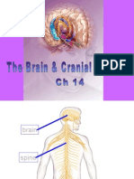 Ch 14 Brain Cranial Nerves