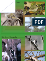 bird id ppt 51 60 only