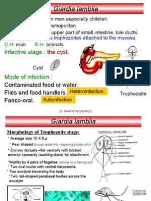 Férgek diagnosztizálása és kezelési módszerei, Helminthiasis kezelési standard