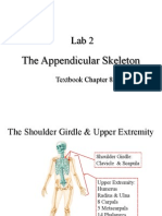 Lab2 AppendicularSkeleton