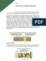 Trasporte Molecular de La Membrana Microbiana