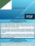 20150329 - Observai Os Passaros Do Ceu