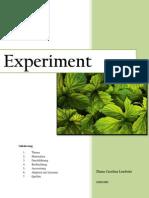 Experiment Biologie - Wachstumsverfahren von Pflanzen